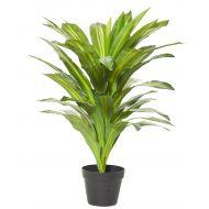 Rogue Dracaena Plant-Garden Pot Variegated/Black 65x65x80cm