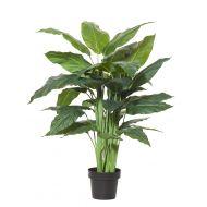 Rogue Spathiphyllum Plant-Garden Pot Green/Black 85x85x120cm