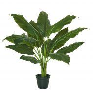 Rogue Spathiphyllum Plant-Garden Pot Green 55x55x64cm