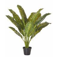 Rogue Dieffenbachia Plant-Garden Pot Variegated/Black 65x65x64cm
