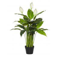 Rogue Spathiphyllum Plant-Garden Pot Green/Black 49x49x96cm