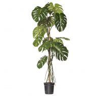 Rogue Monstera Vine Plant-Garden Pot Green/Black 85x70x150cm