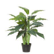 Rogue Spathiphyllum Plant-Garden Pot Green/Black 75x75x80cm