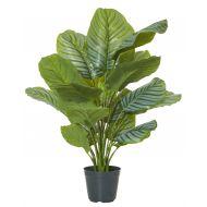 Rogue Calathea Plant-Garden Pot Variegated/Black 60x60x86cm