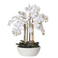 Rogue Butterfly Orchid-Round Pot White/White 80x80x83cm
