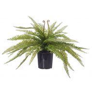 Rogue Boston Fern-Garden Pot Green/Black 59x65x56cm