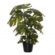 Rogue Monstera Plant-Garden Pot Green/Black 60x55x66cm