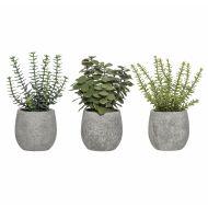 Rogue Mini Succulent Mix-Tub Pot 3 Asst. Pack of 6 Green/Grey 19x19x19cm