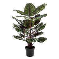 Rogue Calathea Plant-Garden Pot Green/Burgundy 70x70x112cm