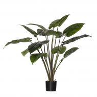 Rogue Philodendron Congo Plant-Garden Pot Green/Black 100x100x110cm